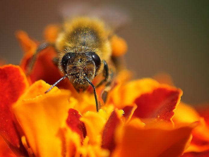 """""""APİTERAPİ SEMİNERİ""""nde Apiterapi Derneği başkanı Dr. Ali Timuçin Atayoğlu da """"apiterapi ve arı ürünlerinin kullanımı"""" konularında eğitim materyali sağladı."""