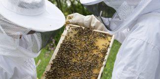 Arı Konaklama Belgesi açıklamaları.