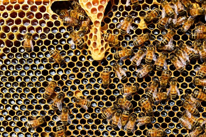 Arı Nedir.